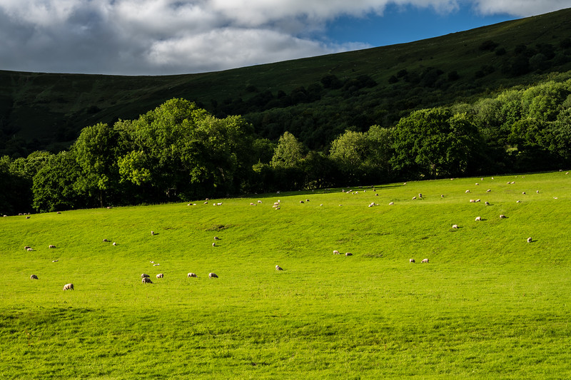 Sheep in a Welsh valley