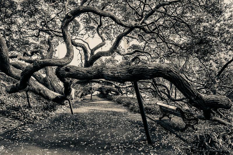 auckland_tree-webfinal-1190.jpg