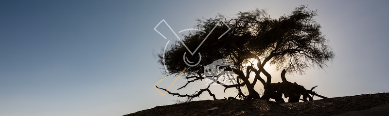 """Silhouette of El-Santa against a setting sun, this is a remarkable lone """"magic tree"""" groing on limestone rocks and overlooking El-Khiyam"""