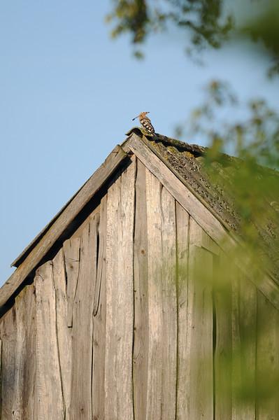 na stodole.jpg