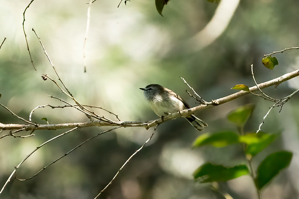 Other Small Birds