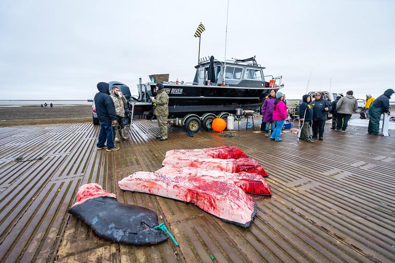Utqiagvik Whaling-7203-Juno Kim-nw.jpg