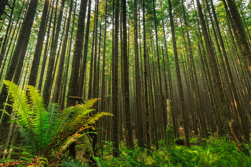 Fern and Trees-2427.jpg