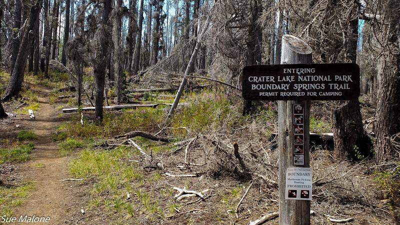 08-18-2020 Boundary Springs Hike-17.jpg