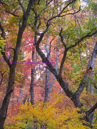 Scenes from the Arboretum