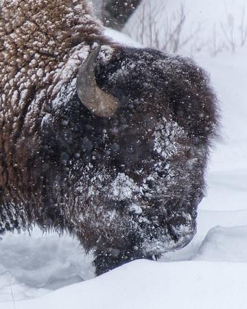 Wyoming, Idaho and Montana