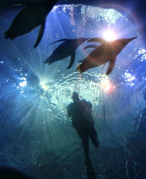 penguin_diver_lowres.jpg
