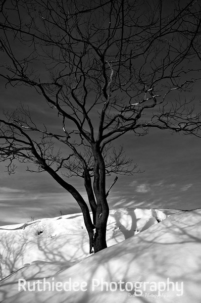 Winter shadows...