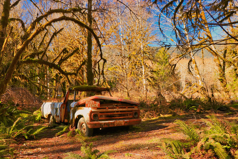 Abandoned truck in the Quinault Rainforest