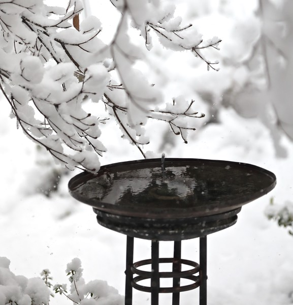 Heated birdbaths are nice to have at times like this