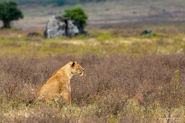 2021 Ngorongoro