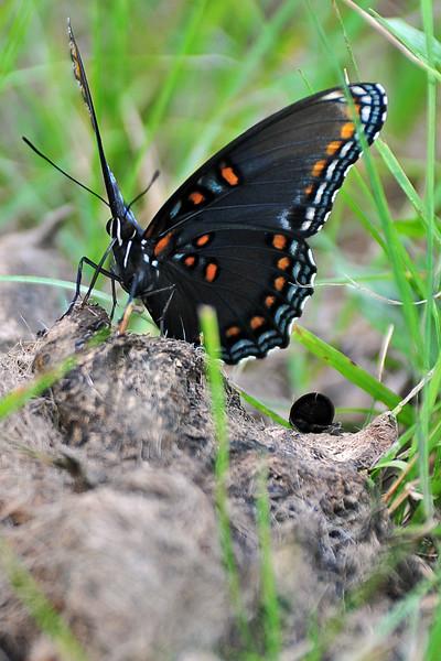 Wildlife - West Virginia