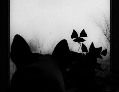 03-12-2020-silhouette
