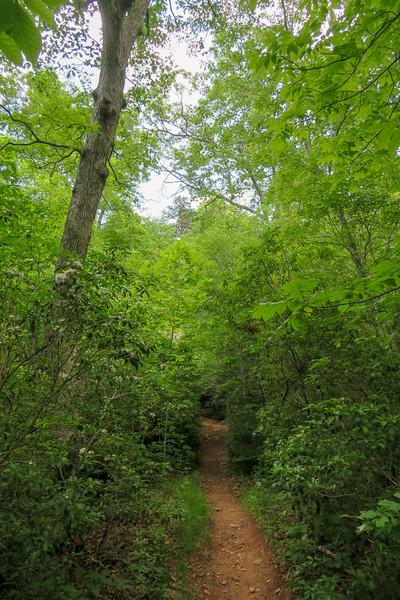 Fletcher Creek Trail -- 2,650'