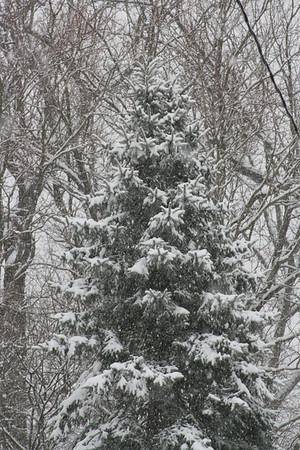 Winter In Jersey