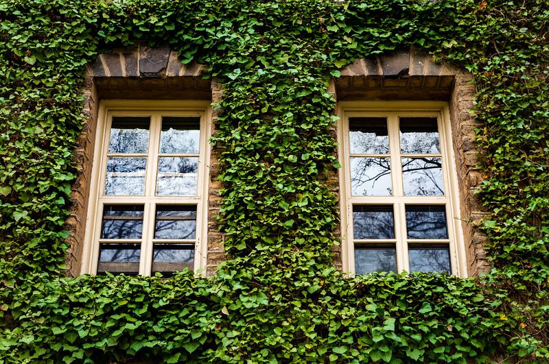 Princeton Ivy added 5-25-2017-4536.jpg