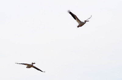 032719 McHenry Pelicans (MA)