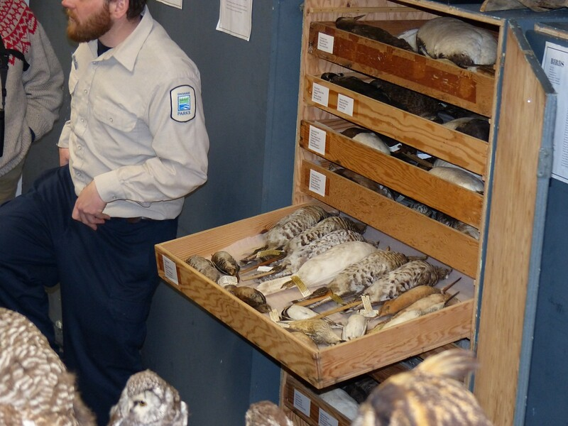 A view of some of the Algonquin Birds collection