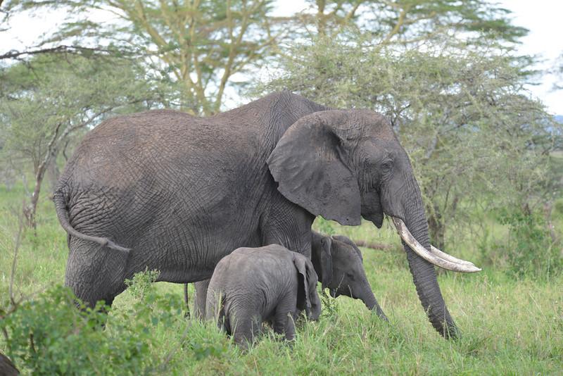 East Africa Safari 349.jpg