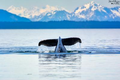 =X= Millennium Alaska 2019