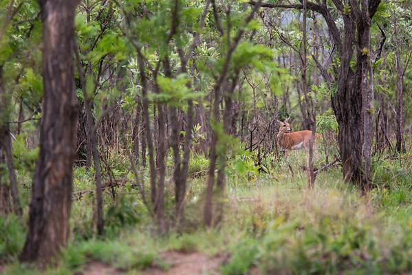 More Safari, South Africa