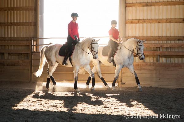 Four Star Farm Stallion Station 2014