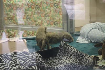 SD Wild Animal Park 2016-12-12