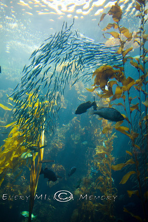 Monterey Bay Aquarium - California