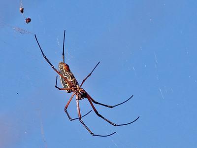 Insekter og edderkoppdyr