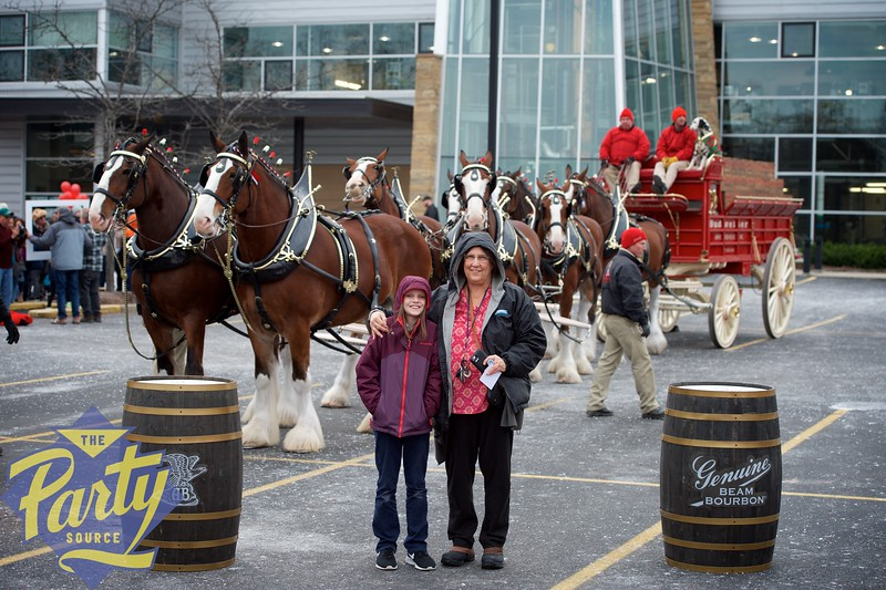 Clydesdale Portraits 34.jpg