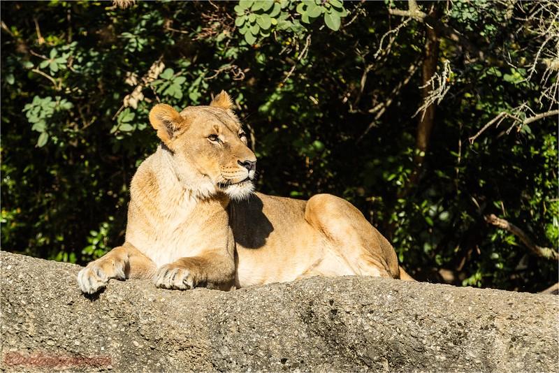 2016-10-05 Zoo Basel0U5A0314.jpg