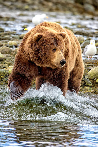 Alaska_2013_IG3A3993.jpg