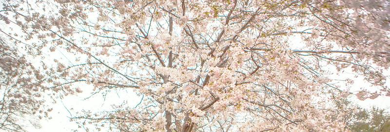 2014_03_22_Arboretum_family-27.jpg