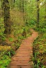 Trail from Lake Ozette to Cape Alava, Olympic National Park, Washington. © 2007 Kenneth R. Sheide