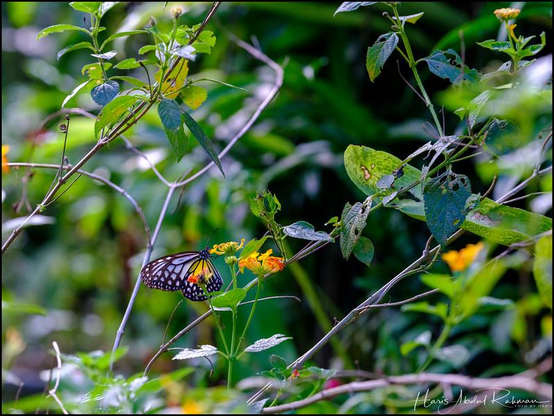 200104 KL Butterfly Park 41.jpg
