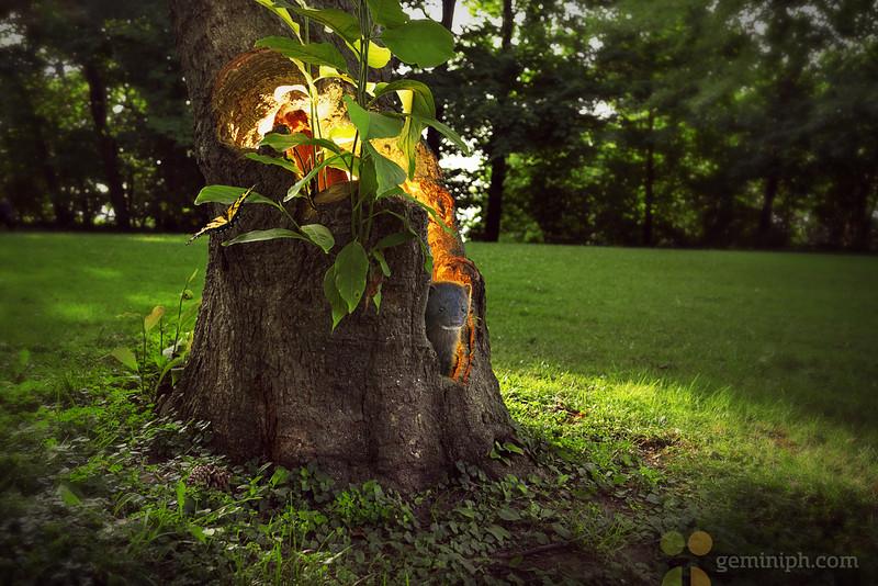 Ferret Tree_WMsm.jpg