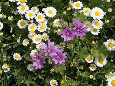 Wild Flowers Far Afield