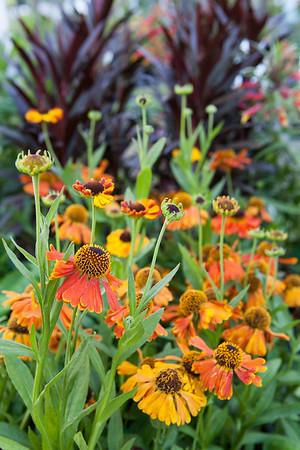 Local Favorite: Flowerland July 2015