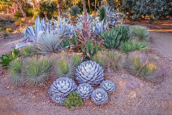 Ruth Bancroft Gardens