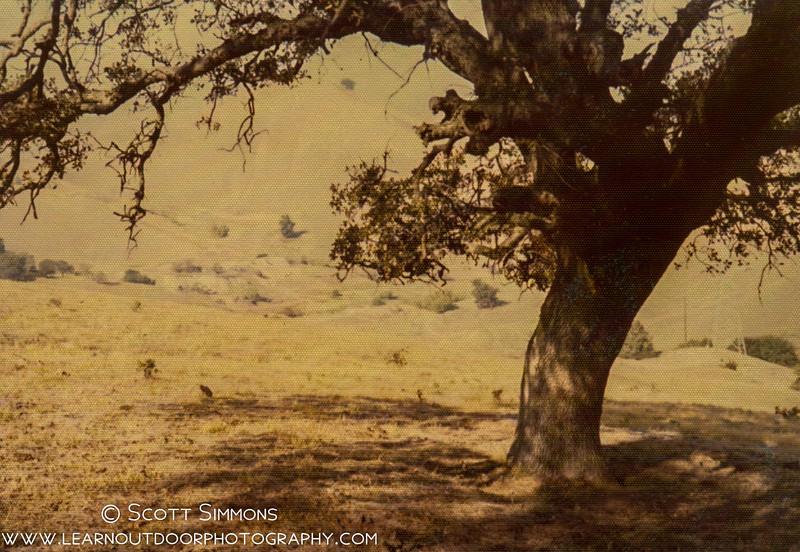 California Landscape 001.jpg