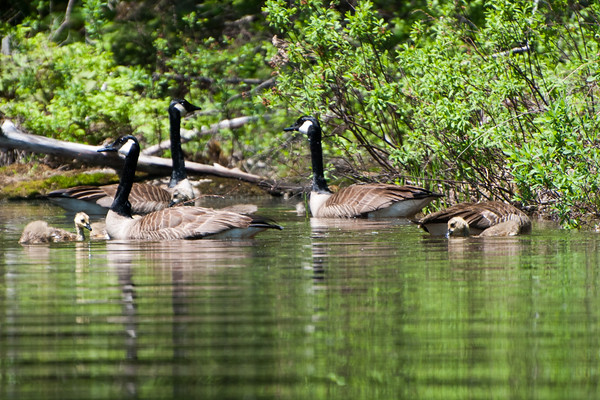 Goose Pond, Canaan NH,  May 27, 2020