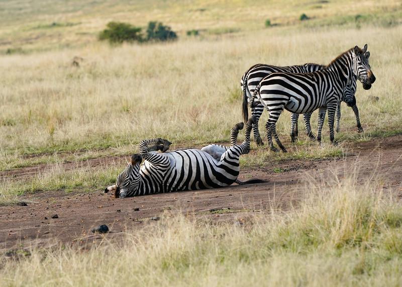 safari-2018-95.jpg