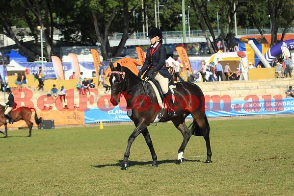 2014 09 30 Perth Royal Show Standardbred Ridden