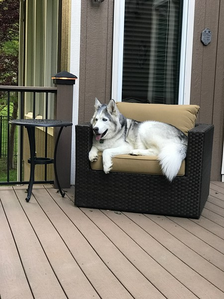 Blue Resting on the Deck