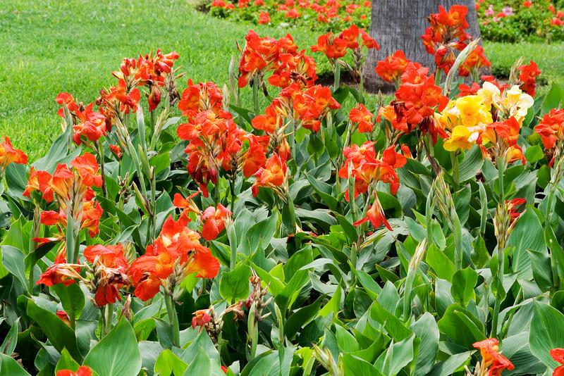 Red Gladiola at Love Park.jpg