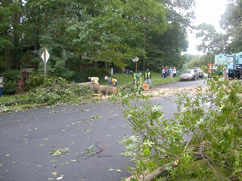 View across the street from Brad and Karen's.  Tree was in the across the middle of the street.