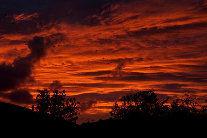 Jackdaws at Sunset