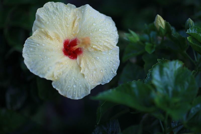 Kauai_D2_AM 123.jpg