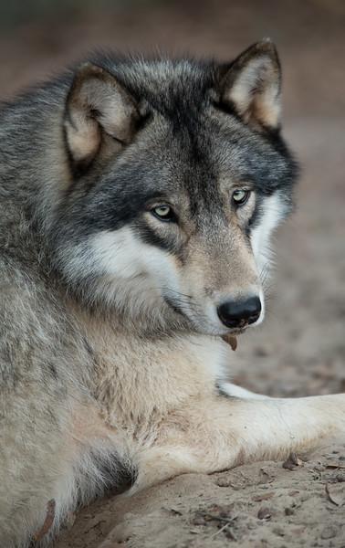 Seacrest Wolves_-18.jpg