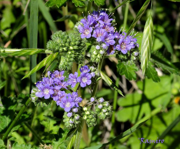 Purple Flower IMG_3212.jpg